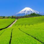 静岡県のさまざまなデータをご紹介!