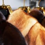 ファーアイテム高価買取のために!フェイクファーや毛皮の手入れ方法